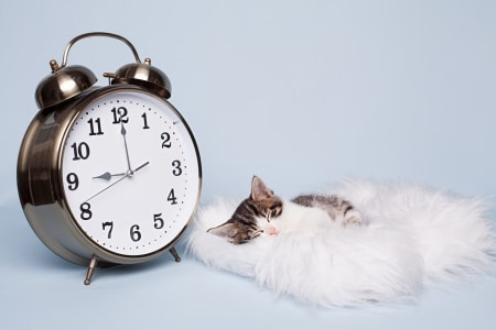 Kitten Sleeping Next to Clock on Cushion